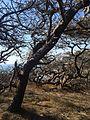 Torrey Preserve, San Diego, CA, USA - panoramio - Sergei Gussev (9).jpg