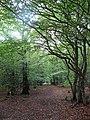 Track, West Wood - geograph.org.uk - 1530510.jpg