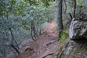 Robert Louis Stevenson State Park - Image: Trail in Robert Louis Stevenson State Park to the summit of Mount Saint Helena 3