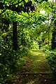 Trail to Aihualama Falls (5171253032).jpg