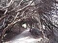 Tree arches.jpg