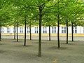Trees at palace - Frederiksberg Have - Copenhagen - DSC09177.JPG