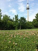 Trifolium fragiferum (subsp. fragiferum) sl25.jpg