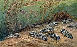 Reconstituição de trilobites vivos.