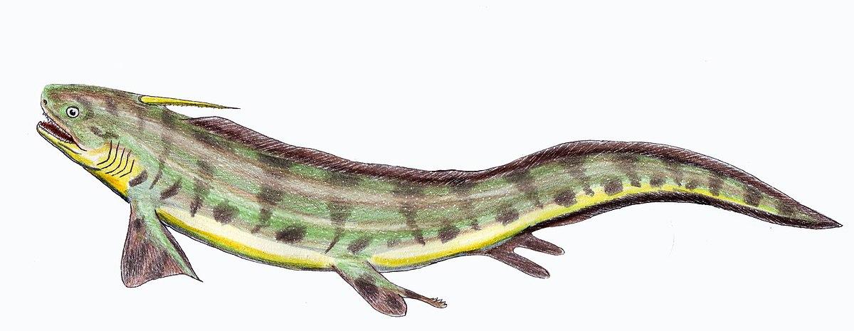 Triodus Wikipedia