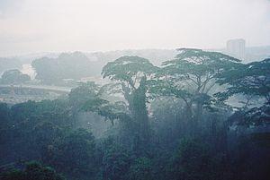 Tropical rainforest, Johor Bahru