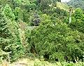 UCBG trees.jpg