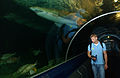 US Navy 060125-N-2959L-092 Airman Marcus Geisler from Lake City, Fla. walks through the underwater portion of an aquarium in Brisbane, Australia.jpg
