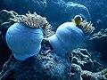 Under Water Life Yellow Fish.jpg