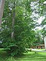 Vana-Vändra mõisa kalmistu 01.JPG