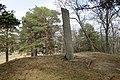 Vangfeltet, Vang Burial Site, Norway's largest burial field, iron-Viking age (gravfelt fra jernalderen), Oppdal, Trøndelag. Memorial (minnestein) 863-1889. 2019-04-25 373.jpg