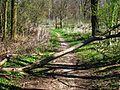 Verwunschener Waldwanderweg.JPG