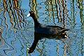 Viera FL Wetlands - Flickr - Rusty Clark ~ 100K Photos.jpg