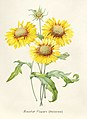 Vintage Flower illustration by Pierre-Joseph Redouté, digitally enhanced by rawpixel 19.jpg