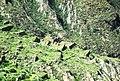 Vista panorámica de las Ruinas de Iskanwaya.jpg
