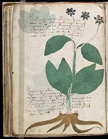 Das Voynich-Manuskript gibt erste Geheimnisse preis