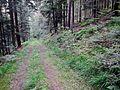Waldweg - panoramio (40).jpg
