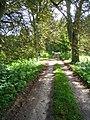 Waldweg bei Flechtkrug - geo.hlipp.de - 14002.jpg