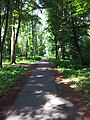 Waldweg bei Herxheim - geo.hlipp.de - 25066.jpg