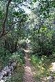 Wanderweg im Wald auf Silba, Kroatien (48670005043).jpg