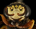 Wasp, U, Face, MD, Wicomico County, Groundworks Farm 2015-08-25-15.56.40 ZS PMax UDR (21351237300).jpg