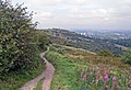 Werneth Low - geograph.org.uk - 1116138.jpg
