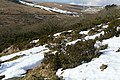 West Dart valley - geograph.org.uk - 1174683.jpg