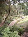 Western Park Auckland.jpg