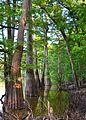 White River Bayou - panoramio.jpg