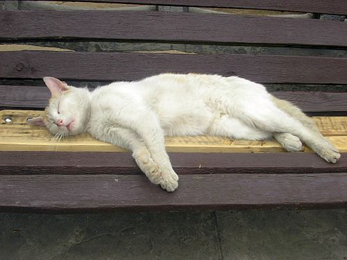 White cat sleeping on a bench.jpg