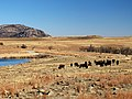 Wichita Mountains, Buffalo, Near Lawton, Oklahoma (5337960248).jpg