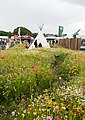 Wild Flower Meadow, New Forest Show - geograph.org.uk - 1431479.jpg