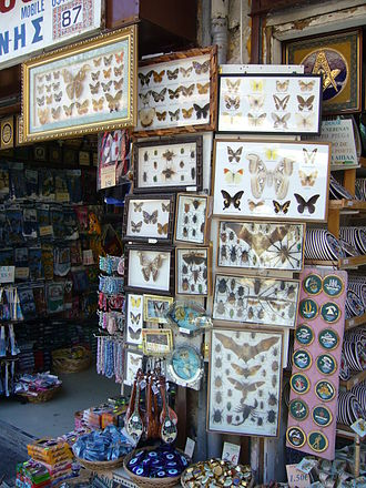 Wildlife trade - Framed butterflies, moths, beetles, bats, Emperor scorpions and tarantula spiders on sale in Rhodes, Greece