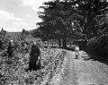 Women in a flower garden, Oakville. - 1909 (21464981202).jpg