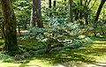 Woodland - Kenroku-en - Kanazawa, Japan - DSC09659.jpg