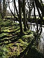 Woodland beside the Ottery - geograph.org.uk - 722321.jpg
