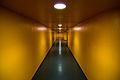 Yellow (2159322198).jpg