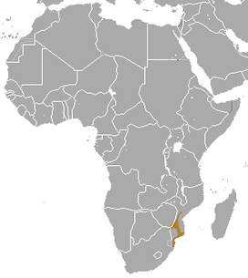 Yellow Golden Mole area.png