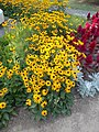Yellow flower bed, Park, 2020 Marcali.jpg