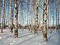 Yoshkar-Ola, Mari El Republic, Russia - panoramio (337).jpg