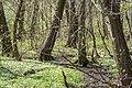 Zakole Wawerskie w Warszawie, las olchowy 001.jpg