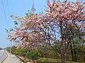 Zeya Theiddhi Ward, Naypyitaw, Myanmar (Burma) - panoramio.jpg