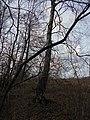 Zolotonis'kyi district, Cherkas'ka oblast, Ukraine - panoramio (310).jpg