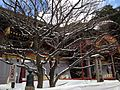 """Kogo no Ume"" plum tree in front of Gohonden of Dazaifu Temman Shrine 2.JPG"