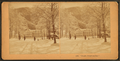 'Bright, Bright as Day.', from Robert N. Dennis collection of stereoscopic views 3.png