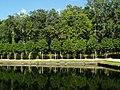Árboles estanque.jpg