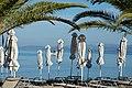 Χαλκιδική, Σιθωνία, Ελιά - Anthemus sea - panoramio (44).jpg