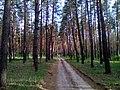Апостоловский лес дорога 2.jpg