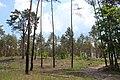 Велике Ходосівське городище IMG 9602 04.jpg