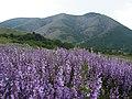 Вид на північно-східні схили верхнього плато Чатирдагу в червні.jpg